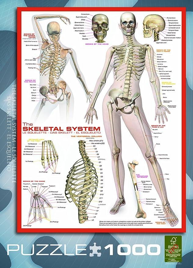 Eurographics Eg60002014 The Skeletal System Puzzle 1000 Teile