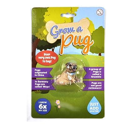 Amazon com: MDI Grow Your Own Pug: Home & Kitchen