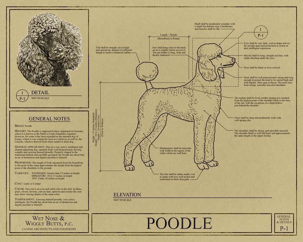 Amazon.com: Poodle Blueprint: Handmade