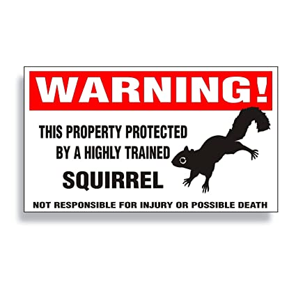 Image result for warning squirrel