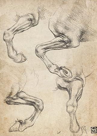 Amazon.de: Vintage Anatomie Leonardo da Vinci Studie der Pferde \'s ...