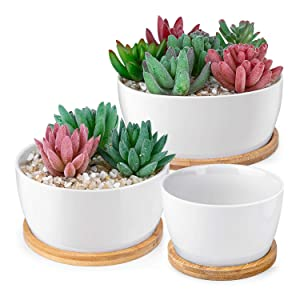HOMENOTE White Succulents Pots
