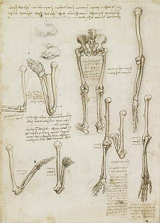 Vintage Anatomie LEONARDO da VINCI Arm und Beine Knochen Struktur ...