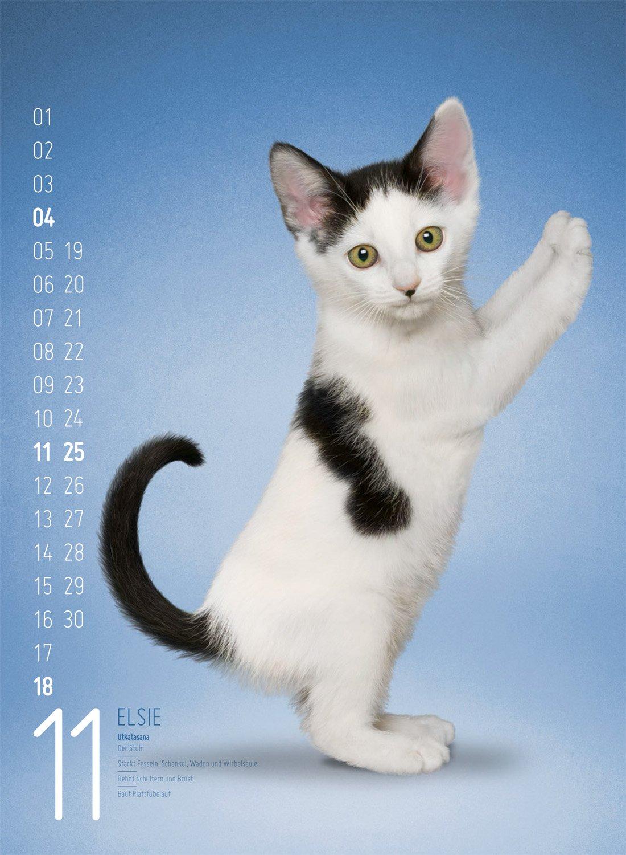 Yoga Cats 2018: 9783838418926: Amazon.com: Books