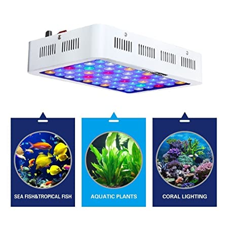 amazon com wattshine aquarium light 180w led coral light large