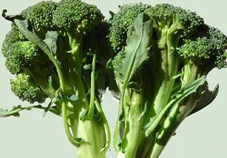70g Calabrese brócoli Semillas ~ 20,000ct MAYOR Supervivencia ...