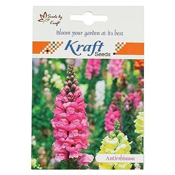 e1c5952897a4c6 Antirrhinum Snapdragon Dog Flower Dwarf Flower Seeds by Kraft Seeds   Amazon.in  Garden   Outdoors