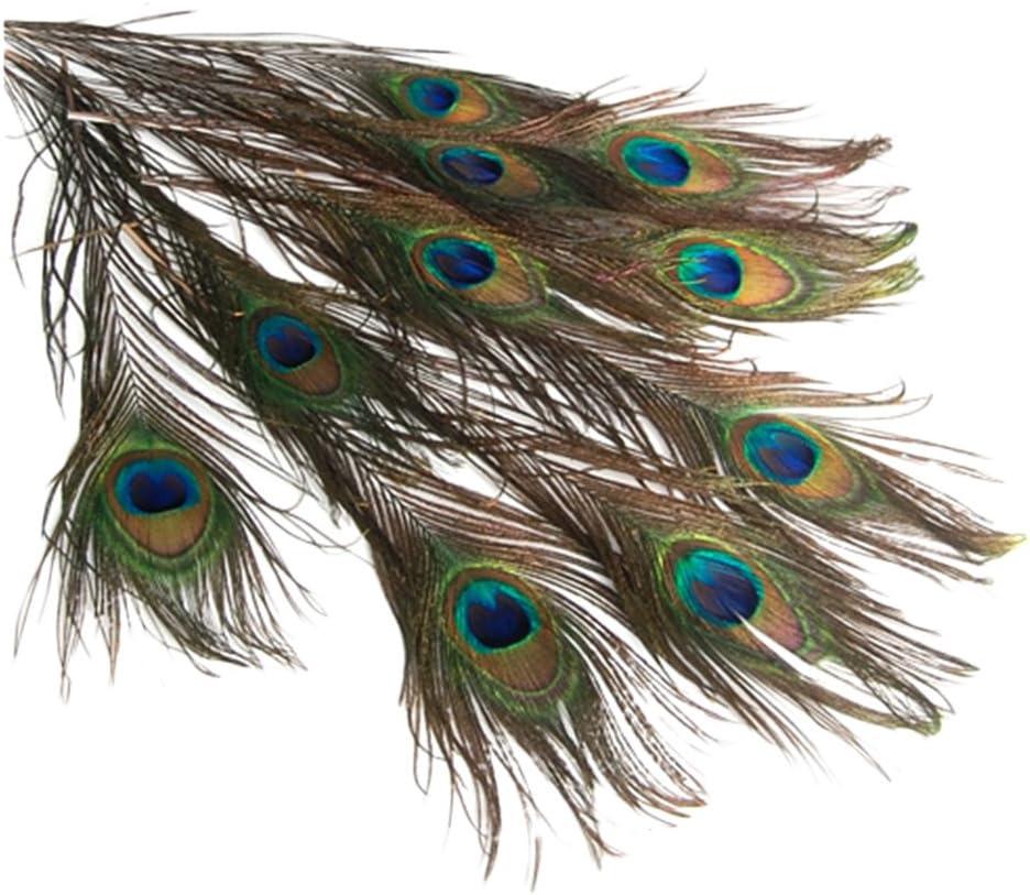 dailymall 10pcs Peacock Eye Tail Feathers 23-33cm Millinery Fascinator Wedding Craft Decor