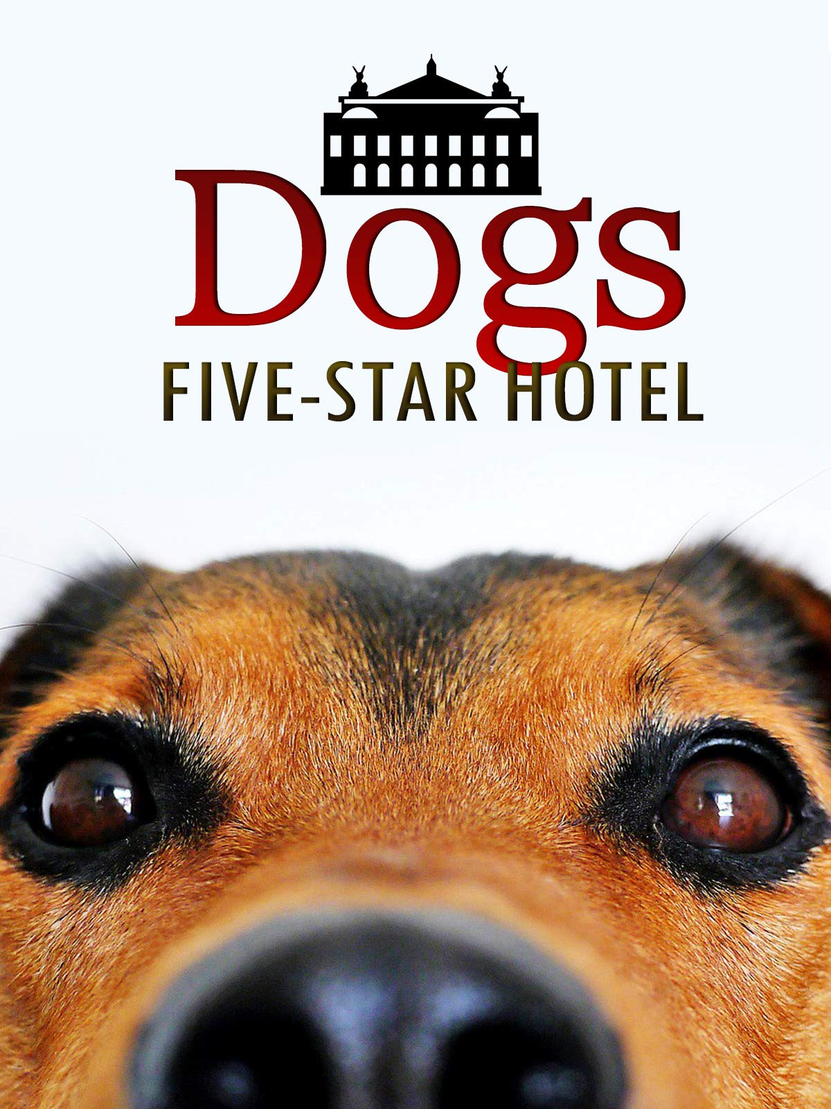 Dogs Five-Star Hotel on Amazon Prime Video UK