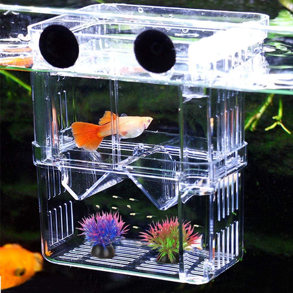 Caja de Cría de Peces de Acuario, Caja de Aislamiento de Peces de Doble Capa, Caja de Aislamiento de Peces/Criadero de Peces para Guppy, Peces Tropicales, Separador de Tanque de Incubadora Flotante