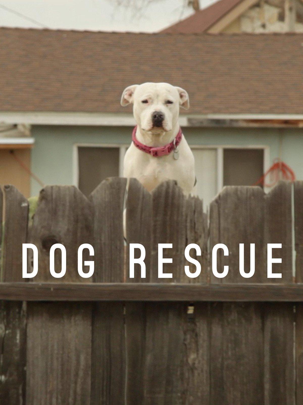 Dog Rescue on Amazon Prime Video UK