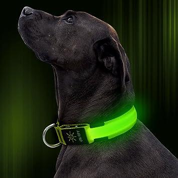 Amazon.com: Illumifun Collar de perro LED, recargable por ...