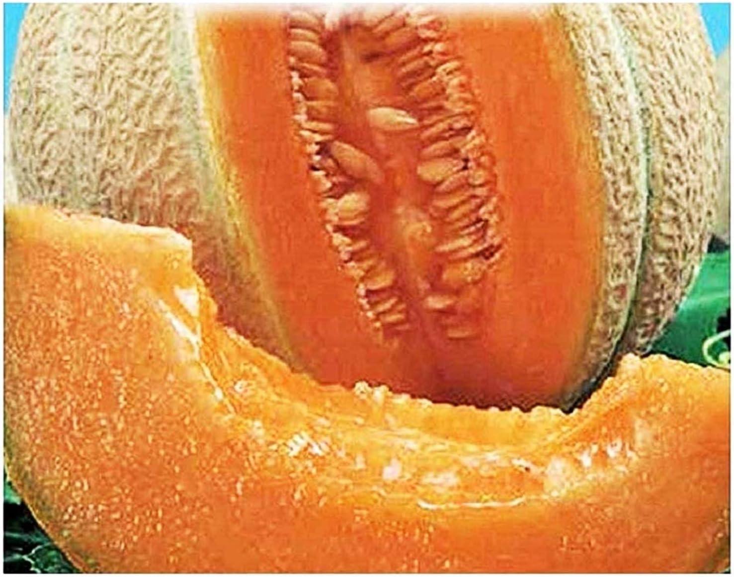 Semillas de melón de marca superior - verduras - cucumis melo - aproximadamente 150 semillas - las mejores semillas de plantas - flores - frutas raras - melones - idea de regalo -