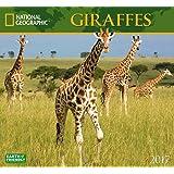 National Geographic Giraffes 2017 Wall Calendar