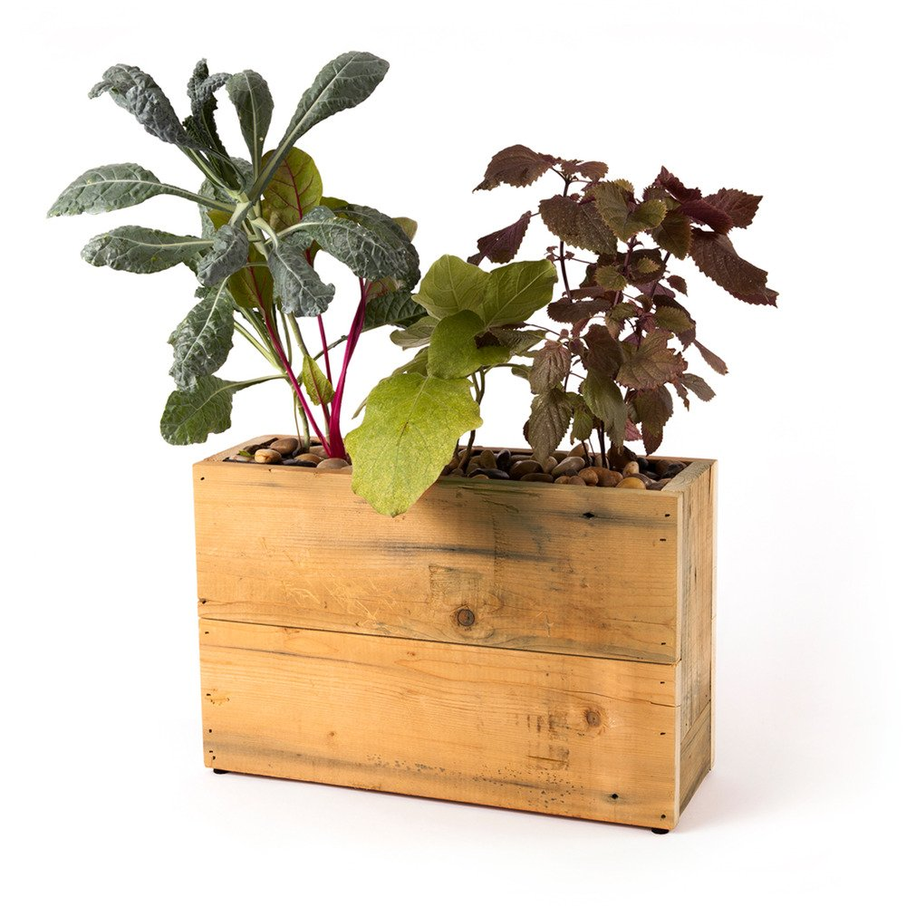 Modern Sprout 3-Pot Hydroponic Planter, Reclaimed Wood by Modern Sprout