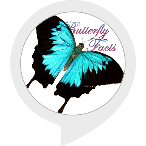 butterfly-facts