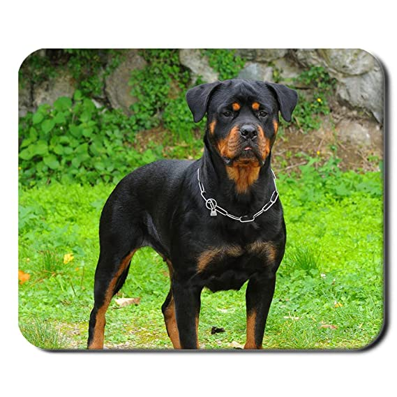 Amazoncom Tyboo Design With Rottweiler Dog For Guy Personalised