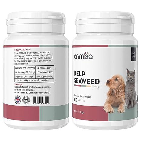 Animigo Algas Kelp para Gatos y Perros. Suplemento Natural para la ...