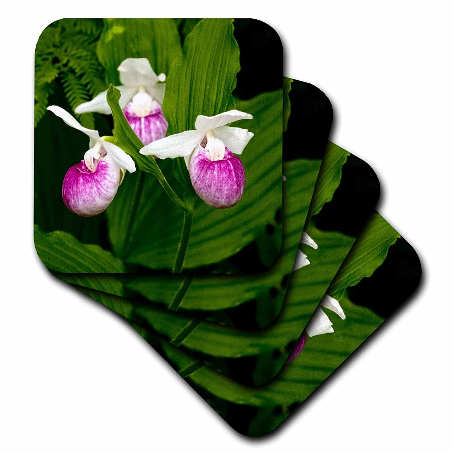 Showy Lady-Slipper flower Itasca SP Soft Coasters 3dRose cst/_92113/_1 MN Peter Hawkins US27 PHA0000 Set of 4