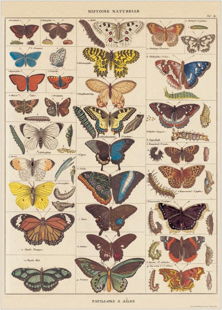 Nos Bons Papillons 20x28 Sheet Cavallini Decorative Paper
