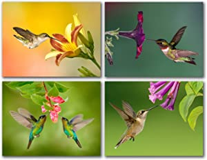"""Hummingbird and Flowers Greeting Cards - Summer Note Cards - Blank on the Inside - Includes 24 Cards and Envelopes - 4 Unique Designs - 5.5"""" x 4.25"""""""