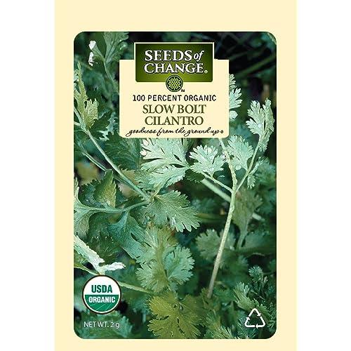 how to grow cilantro indoor