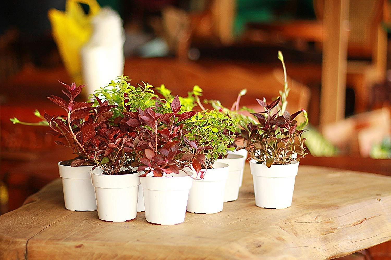 Amazon Panda Pots 50 Plant Pots 3 Inch Diameter Perfect For