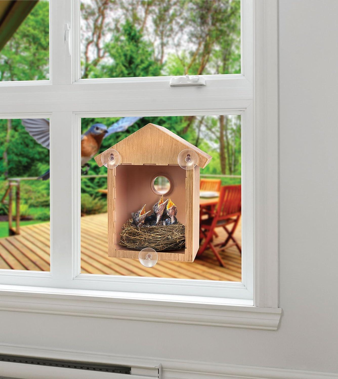 Mirror window bird feeder - Modern In Window Bird Feeder 86 Mounted One Way