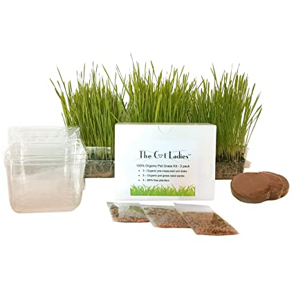 Amazon The Cat Ladies Cat Grass Growing Kit 3 Pack Organic