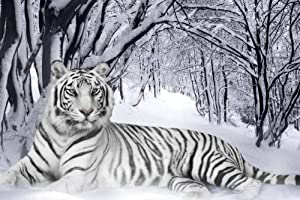 Art Print on Canvas Wall Decor Poster (White Tiger Snow) Size:20x30inch