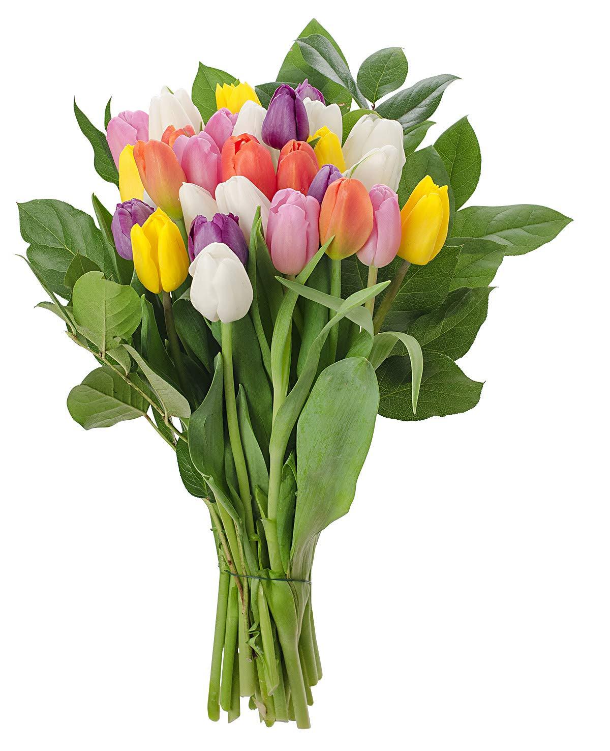 Stargazer Barn Rainbow Bouquet Stems Of Fresh Tulips No Vase, 30 Stems by Stargazer Barn