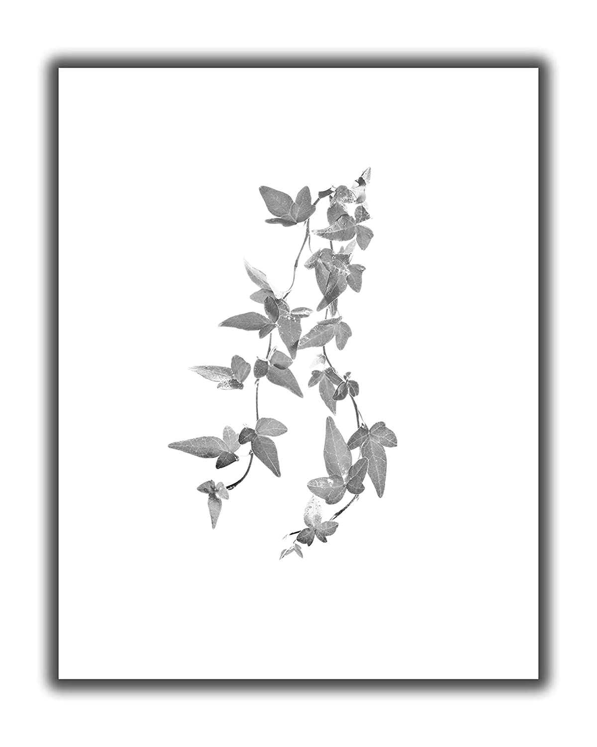 Ivy Leaves on Branch Wall Art Print - 11x14 UNFRAMED, Minimalist Modern Black & White Decor - A Neutral, Contemporary Look for Any Room