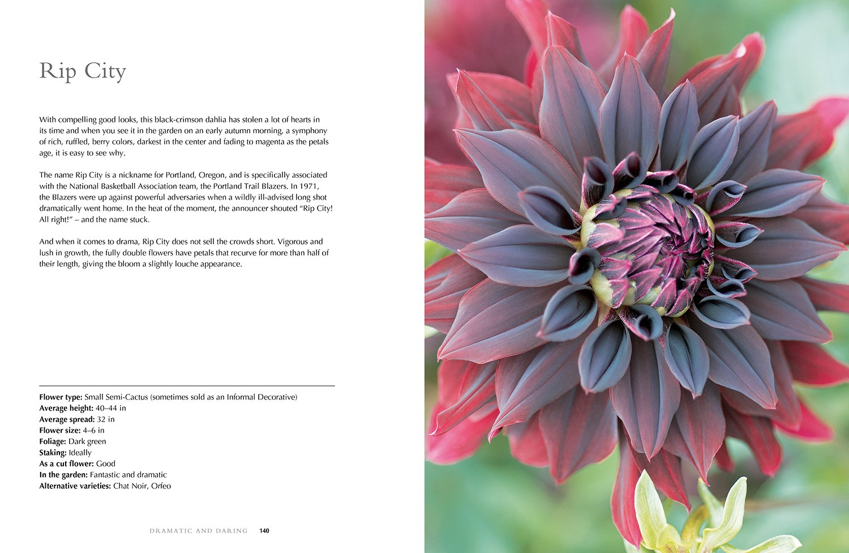Dahlias Beautiful Varieties For Home Garden Naomi Slade