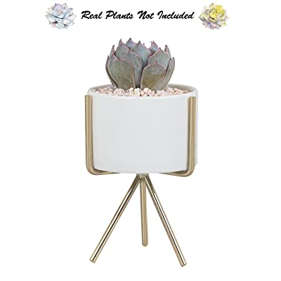"Succulent Planter Stand with Plant Pot, 5"" H Modern Minimalist Indoor White Ceramic Flower Pot with Triangle Metal Holder for Succulents Mini Cactus Air Plants Herb Fern Bonsai by Ebristar - Small : Garden & Outdoor"