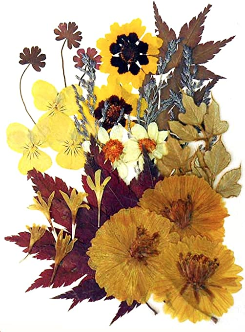 Pressed flowers mixed pack rose leaves marguerite 7 colors lace flowers foliage