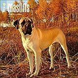 Mastiffs Calendar 2018 - Deluxe Mastiff Wall Calendar (12x12)