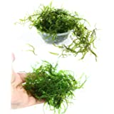 Live Aquarium Plants Java Moss for Freshwater Fish Tank Decorations use Green Moss Create a Moss Wall or Moss Carpet and Moss