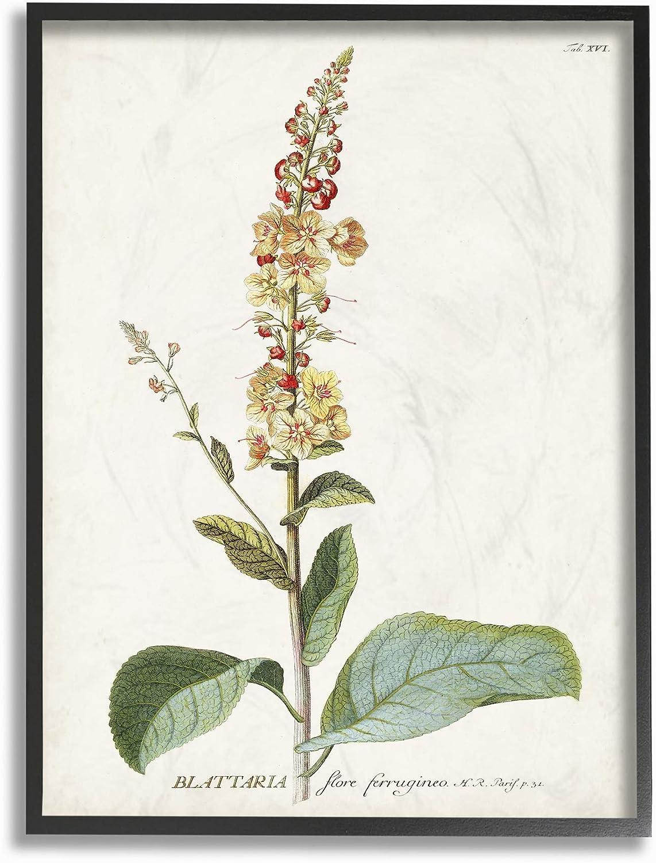 Stupell Industries Botanical Plant Illustration Flowers Vintage Black Framed Wall Art, 11 x 14, Design by Artist Unknown