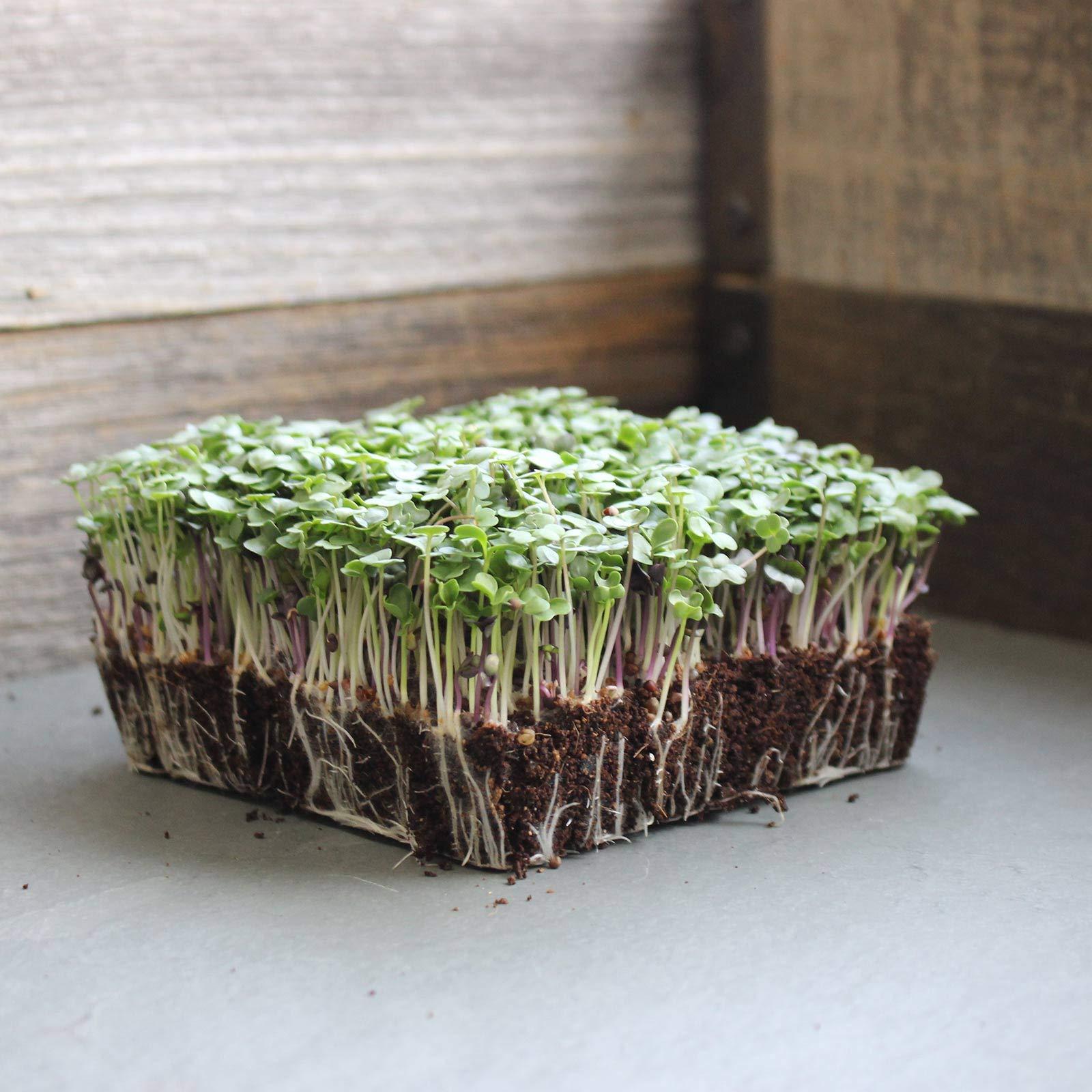 Basic Salad Mix Micro Greens Seeds: 25 Lb - Bulk Non-GMO Seed Blend: Broccoli, Kale, Kohlrabi, Cabbage, Arugula, More by Mountain Valley Seed Company (Image #5)