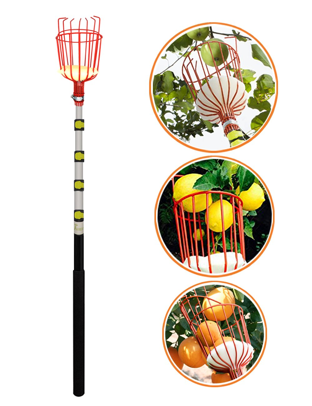 13-Foot Fruit Picker With Light-weight Aluminum Telescoping Pole And Bruise Free Basket For Apple,Pear,Peach,Orange And More Peach Harvesting,Handy 5 Section Extension Pole.-By EnergeticSky
