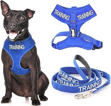 Arnés acolchado de neopreno para perro (perro en entrenamiento/no ...