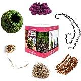 "Super Moss (90432) 6"" Diameter Kokedama Kit, Orchid"