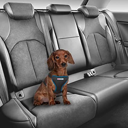 Dog Car Harness >> Amazon Com Real Simple Pet Dog Car Harness Heavy Duty Padded Vest