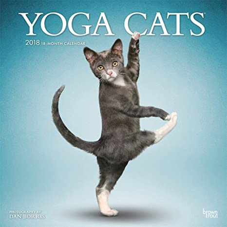 Amazon.com : Yoga Cats Wall Calendar 2018 CUTE {jg} Best ...