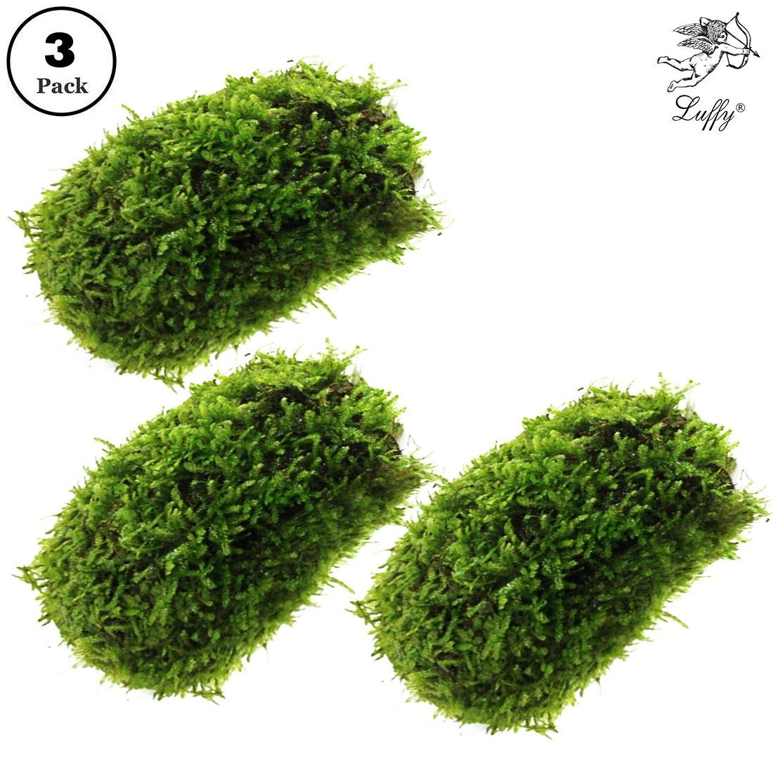 3 Pcs. Coco Mini Moss --- Hiding & Breeding Spot for Fry & Shrimps - Aquatic Play Toy - Fish Moves Around or Swim Under - Builds a Beautiful Aquascape - Easy Care, Hardy, and Long-Lasting Plant by Luffy