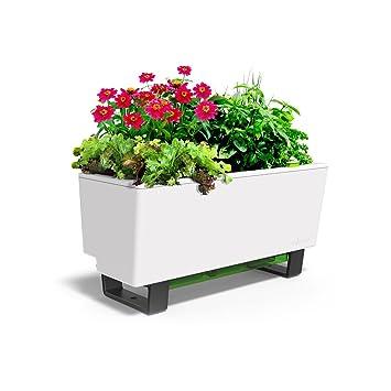 Amazon Com Glowpear Urban Garden Self Watering Mini Bench Planter