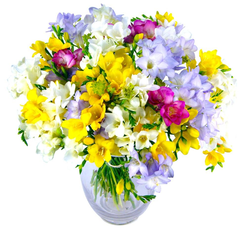 Clare Florist Freesia Fragrance Fresh Flower Bouquet - Colourful Mixed Freesia Hand Arranged by Florists