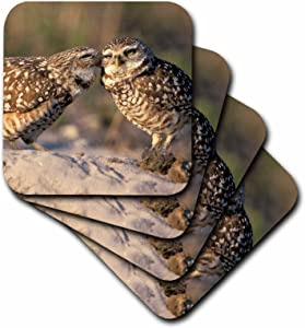 3dRose CST_83697_1 Florida, Fort Myers. Burrowing Owl Pair-Na02 Cad0034-Claudia Adams-Soft Coasters, Set of 4