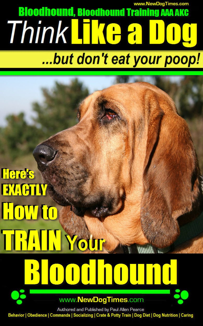 Bloodhound, Bloodhound Training AAA AKC: |Think Like a Dog, But Don't Eat Your Poop! | Bloodhound Breed Expert Training |: Here's EXACTLY How to Train Your Bloodhound 1