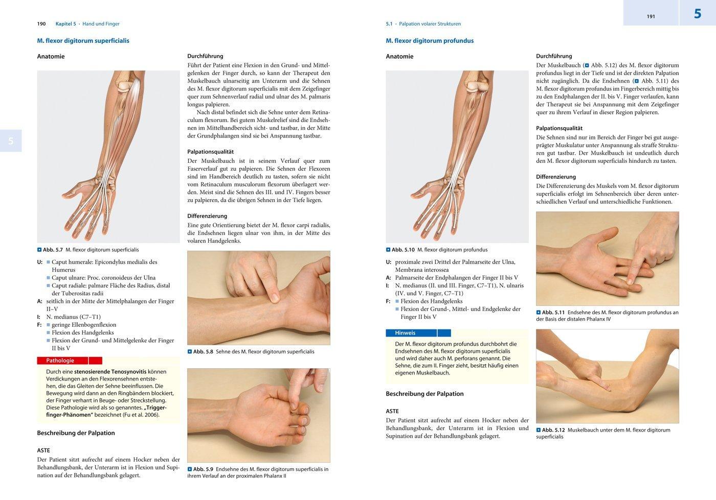 Berühmt 5. Finger Anatomie Fotos - Menschliche Anatomie Bilder ...